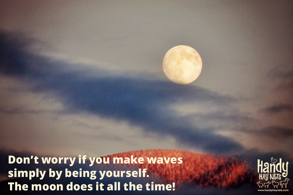 dont-worry-if-you-make-waves.jpg