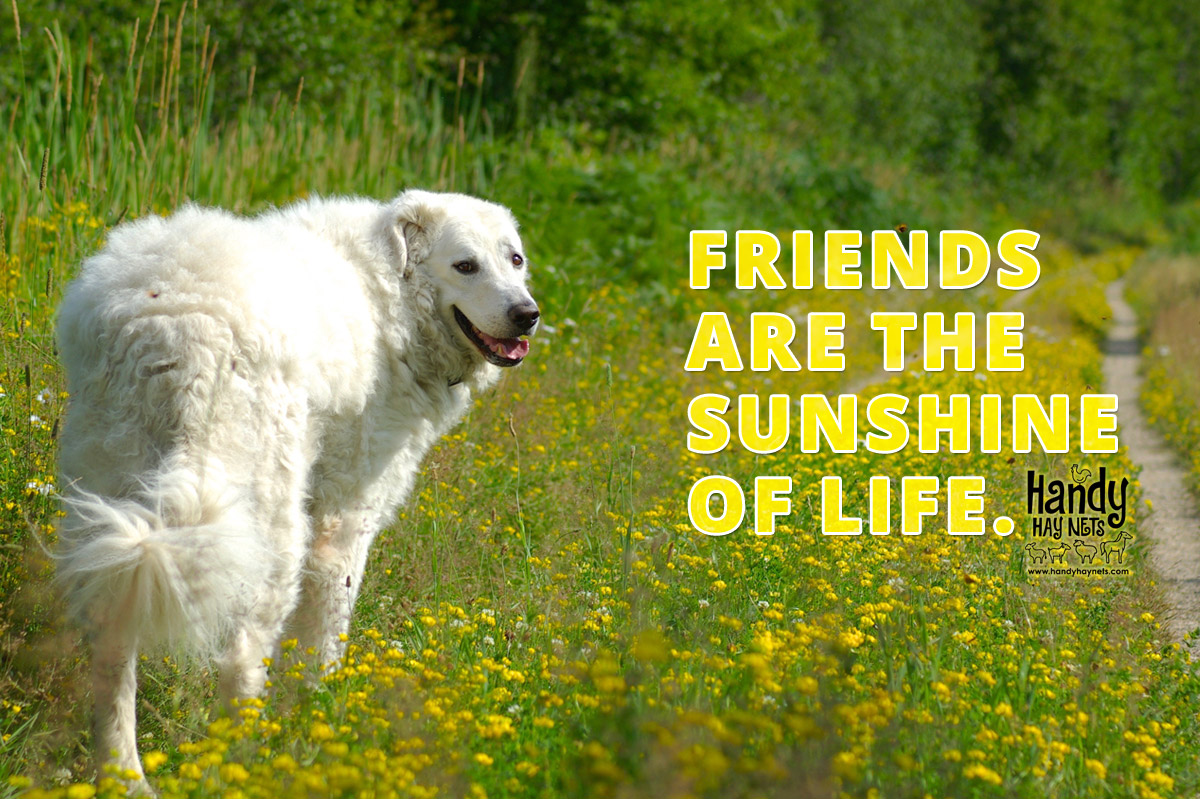 friends-are-the-sunshine-of-life-HHN.jpg