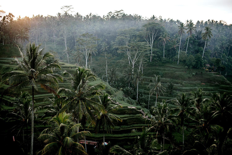 Tegalalang-rice-terrace-bali-engagement 01.jpg