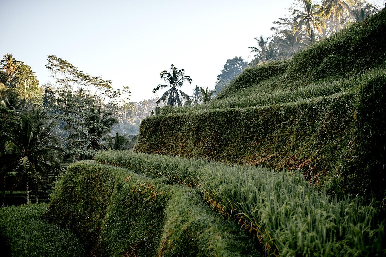 Tegalalang-rice-terrace-bali-engagement 13.jpg