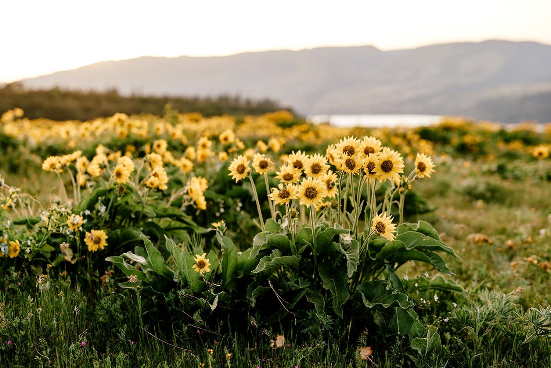 Wild-flower-engagement-session-at-rowena-crest-147.jpg