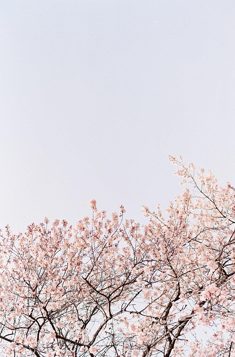 AmandaHartfield_Japan-86.jpg