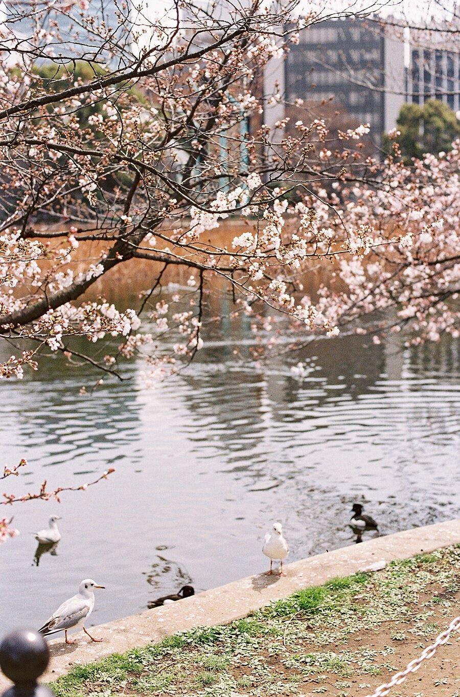 AmandaHartfield_Japan-4.jpg