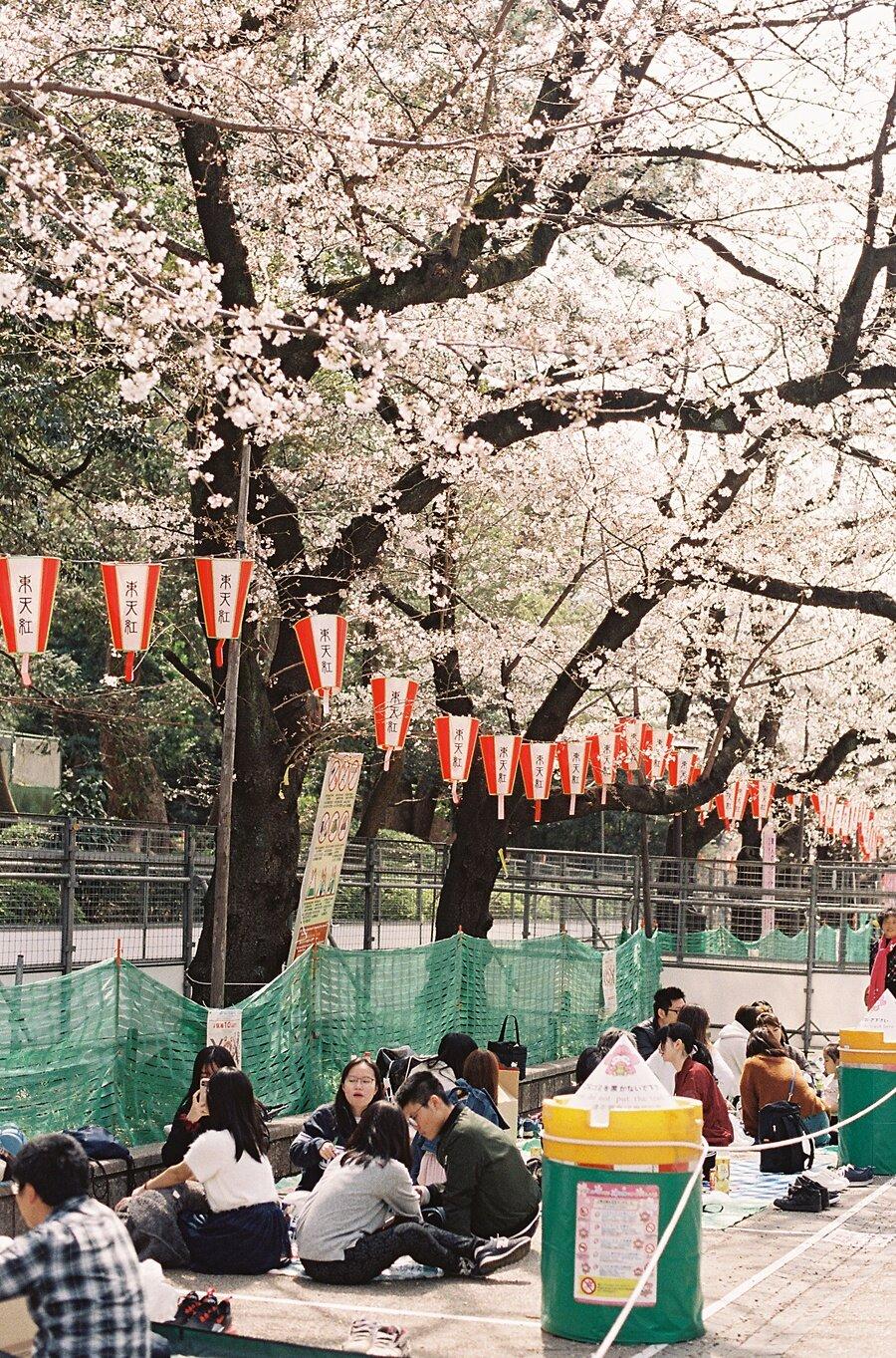 AmandaHartfield_Japan-79.jpg