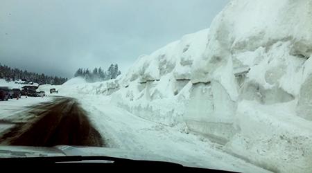 boreal elevated locals