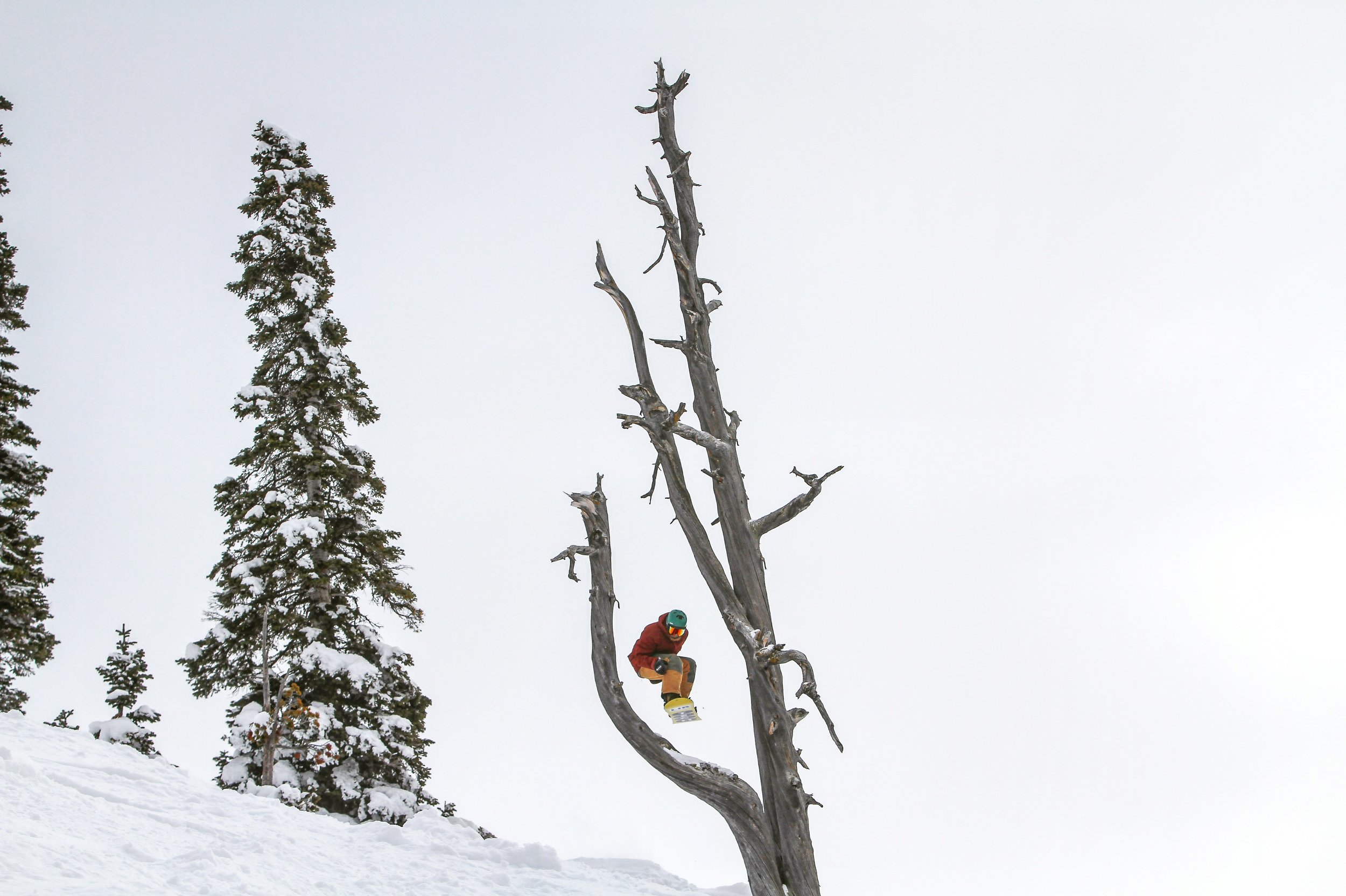 jedd just poppin in! PC pizza Grand Targhee (Powder Day Photography)