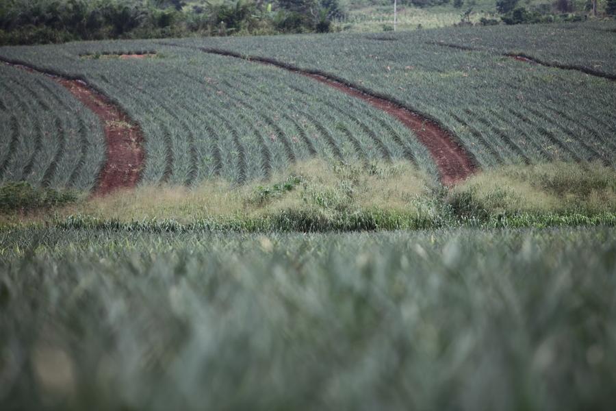 Jei River Farms