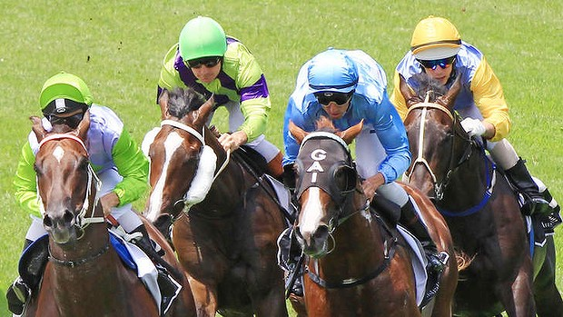 Late surge: Woodbine gave punters a scare on Saturday.  Photo: Jenny Evans