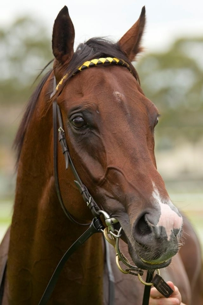 Exciting Starcraft gelding Havanacontests theListed Mick Dittman Plate.