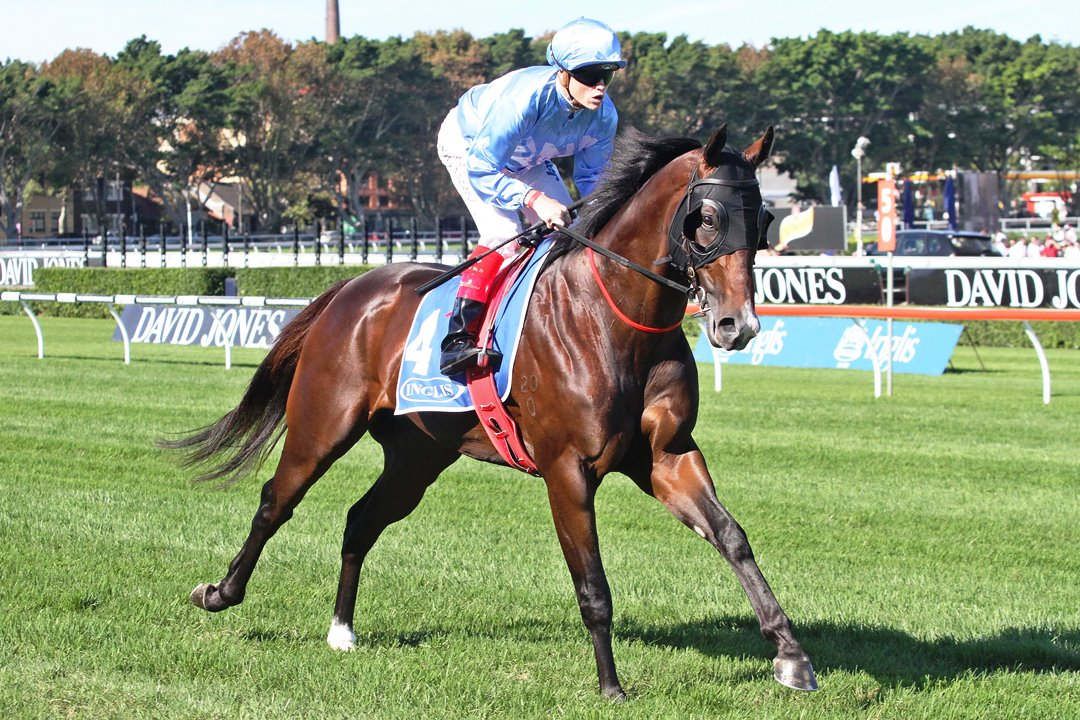 Starcraft gelding Havana contests the Group Three Fred Best Classic over 1350m at Doomben
