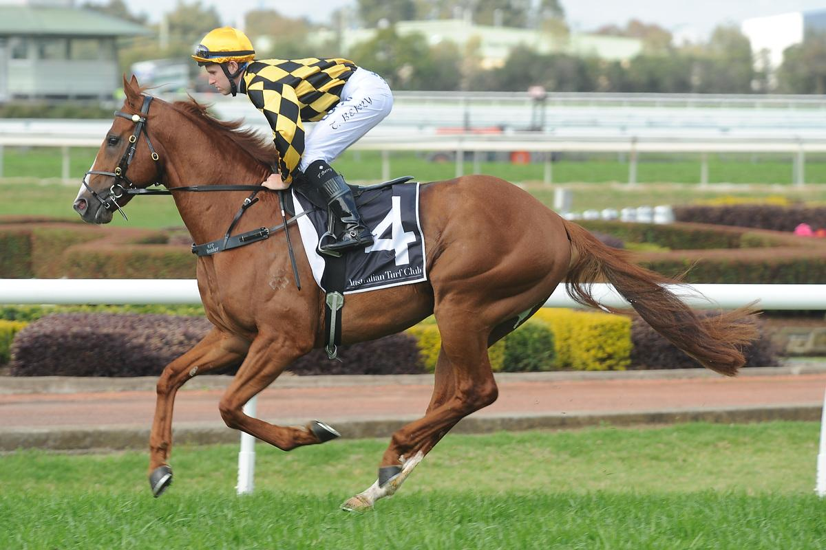 Hussonet colt WOODBINE heads to Saturday Group One The Star Epsom with only 52kg's for trainer Gai Waterhouse.