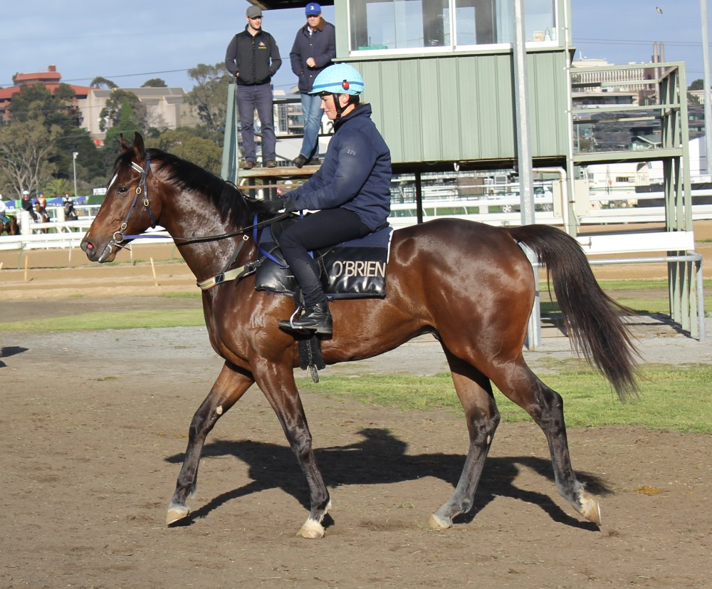 Two-year-old colt Prompt Return (Beneteau x Promt) pictured at track work recently.