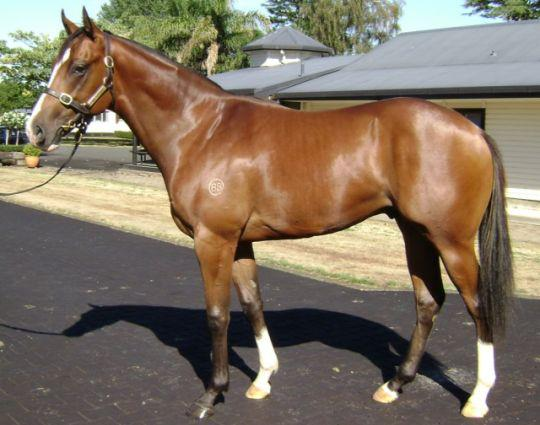 Pictured as a yearling, I'LL TAKE THE JAG, now a 3yo has thrived in recent weeks as he heads to the trials