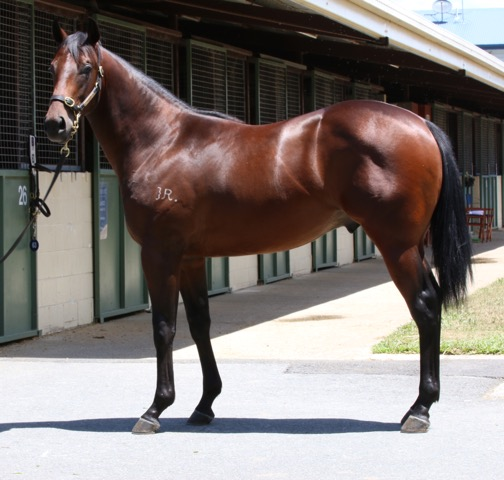 Rosari Farm Lot 536: Exceed And Excel x Quack It, by Ustinov - $380,000 Blue Sky Bloodstock/Gai Waterhouse Racing