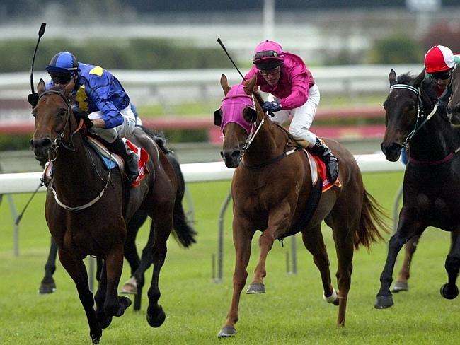 PRIVATE STEER - The 3Time Group 1 winner was purchased privately As Agent by Blue Sky's Julian Blaxland for her breeder as a race mare off the track