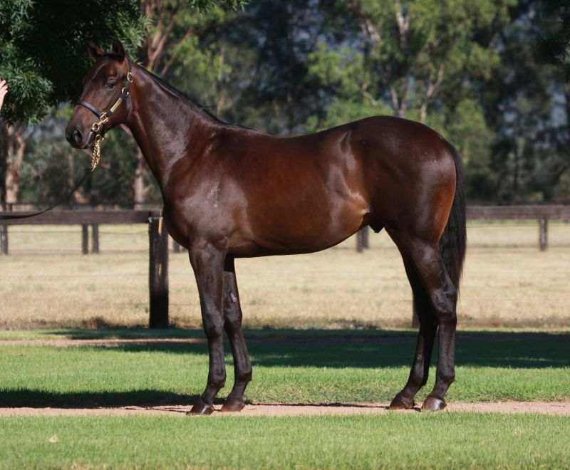 Lot 110 yearling with Gai.jpg