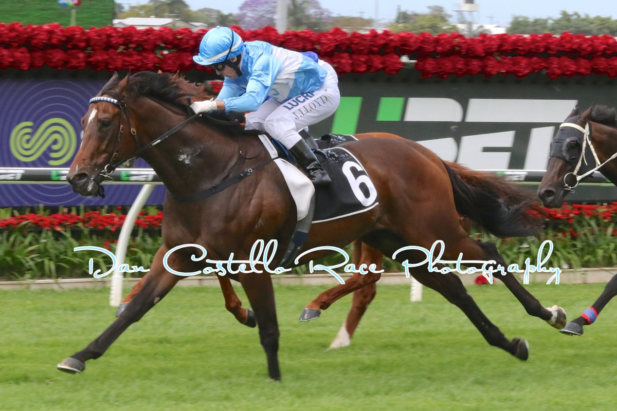 Prompt Return winning at Eagle Farm, his 3rd win from five starts for the Edmonds Racing stable. Picture: Dan Costello