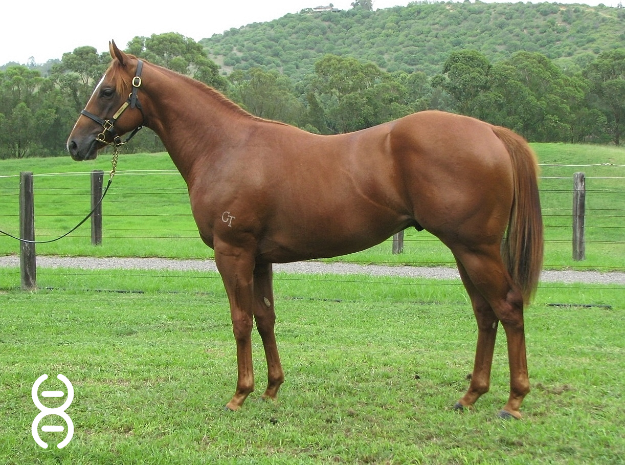 Lot 242: Snitzel x Montana Downs colt - Davali Thoroughbreds