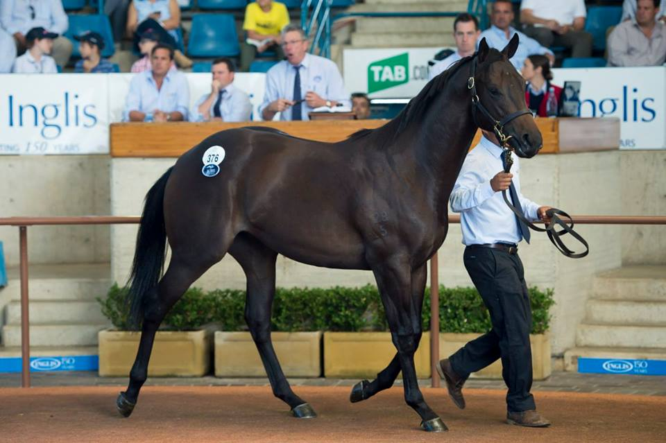 Lot 376: I Am Invincible x Streetcar Stella colt - Widden Stud