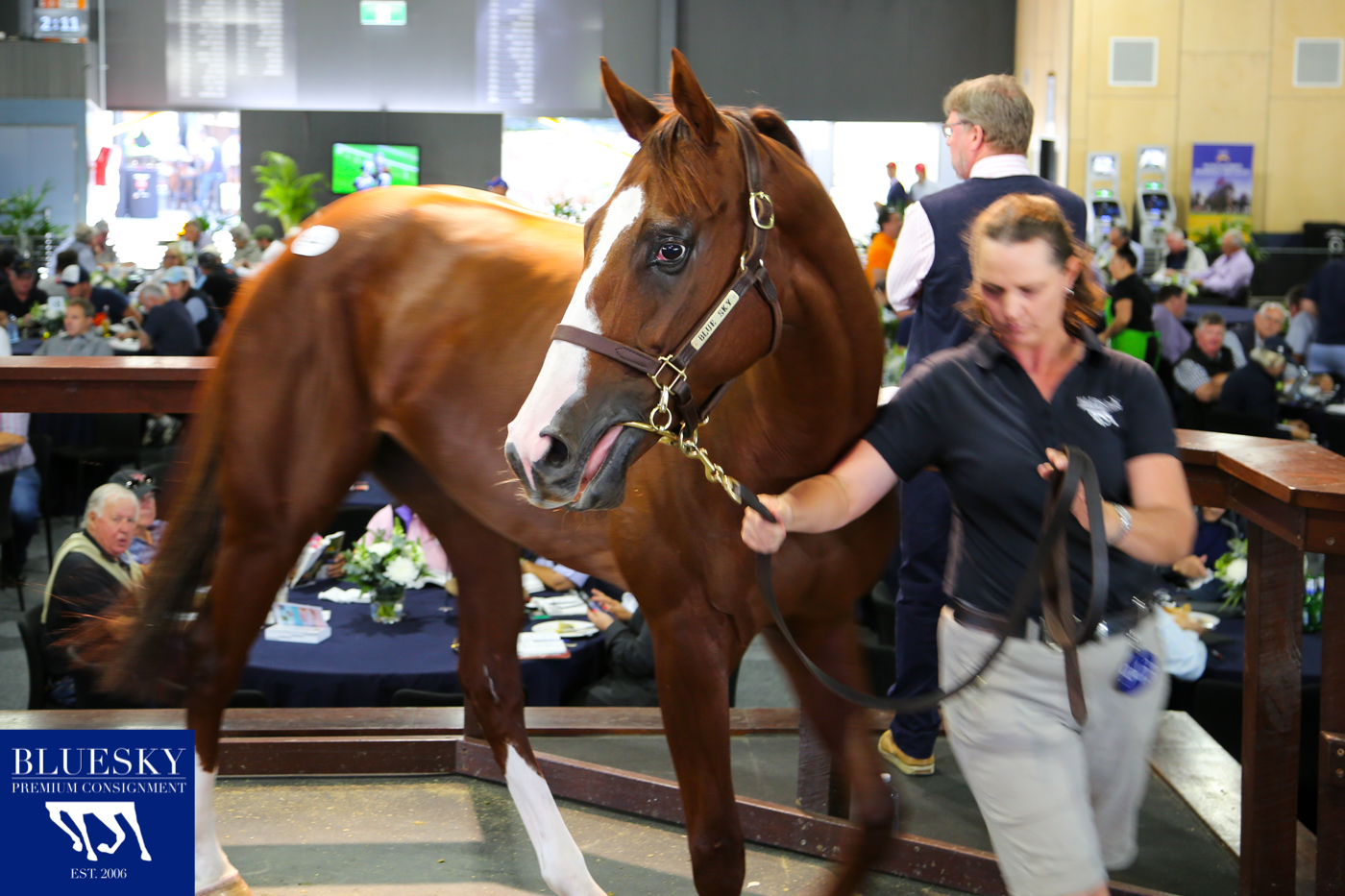 Blue Sky Premium Consignment Top Offering SEXY EYES sells for $650,000 to Suman Hedge Bloodstock