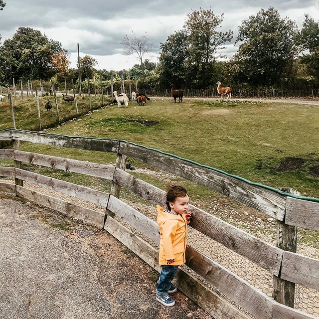 I just love this photo from Davis Farmland a few weeks back. His cute raincoat and vans. He's growing up so fast.  #toddler #instatoddler #farm #farmlife #davisfarmland #outing #momlife #raincoat #targetfind #lama #alpaca #sterlingma #vans #toddlerfashion #kidsfashion #westongeorgef #fall #fall2019