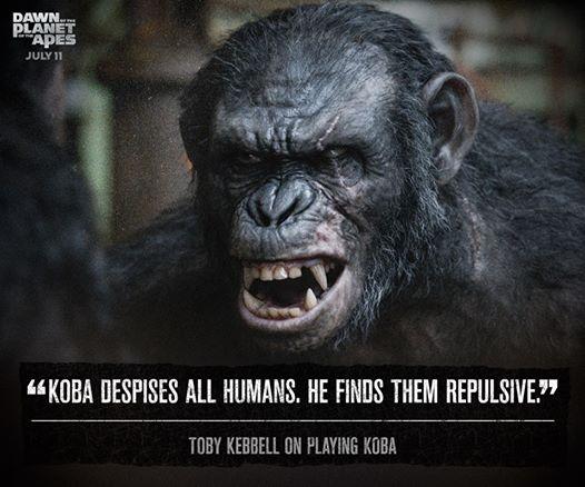 Koba.jpg