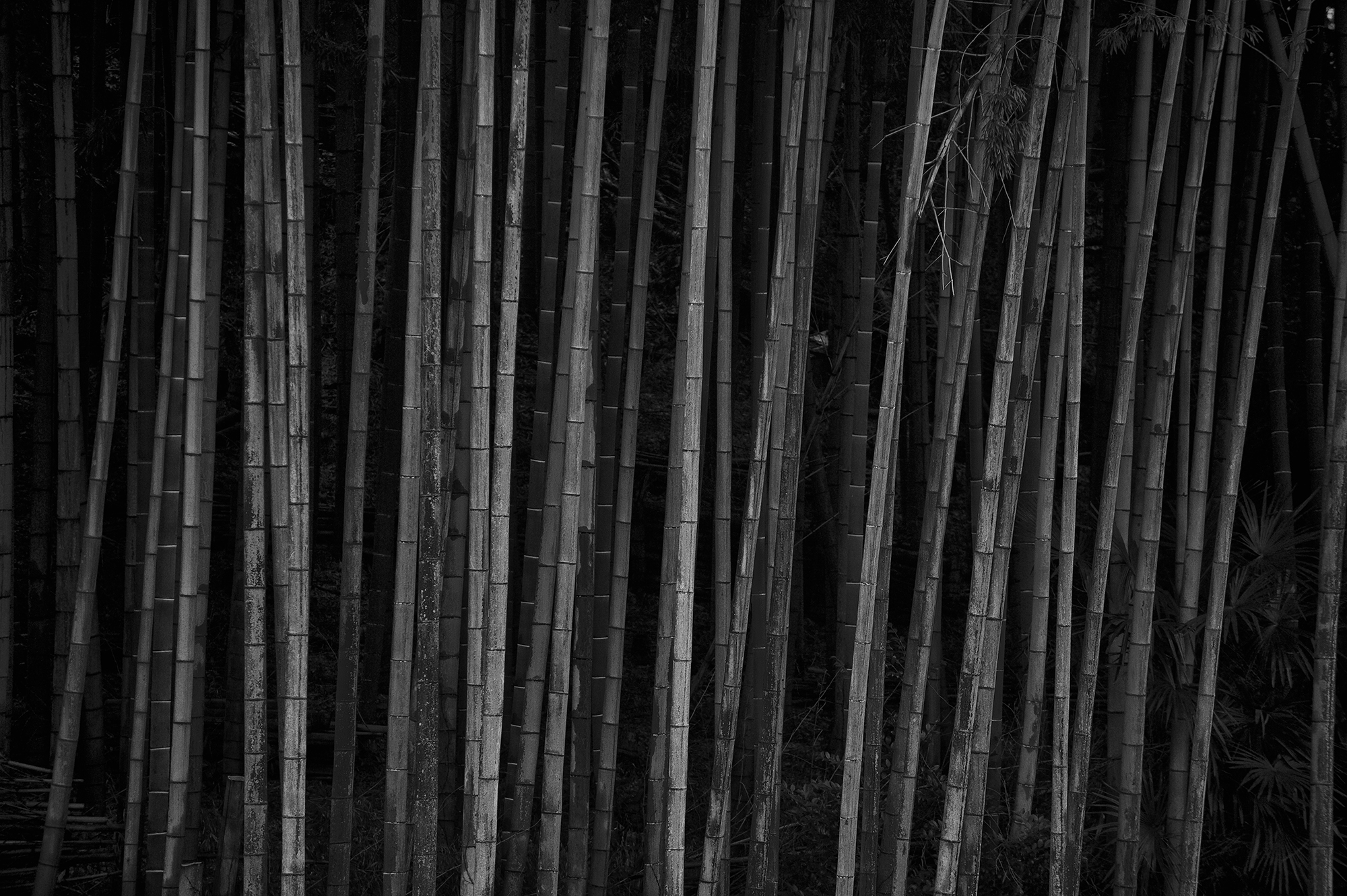 bambooNP.jpg