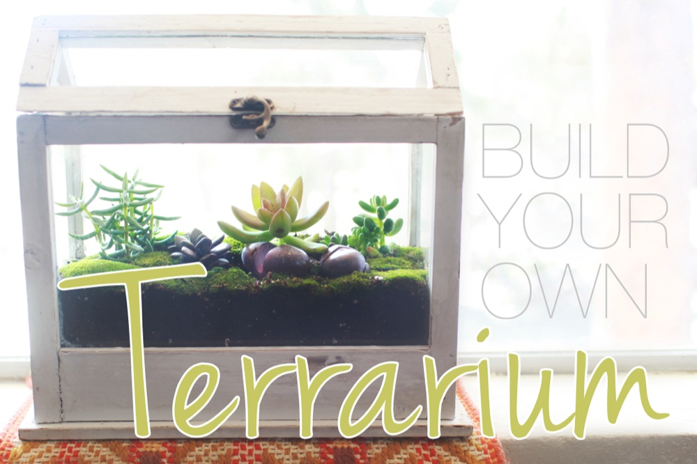 How-to-Build-a-Terrarium.jpg