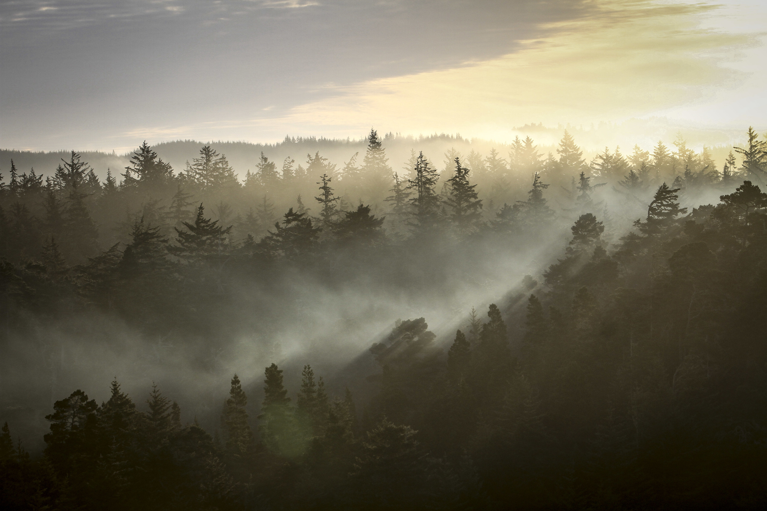 Dawn at Honeyman State Park, OR