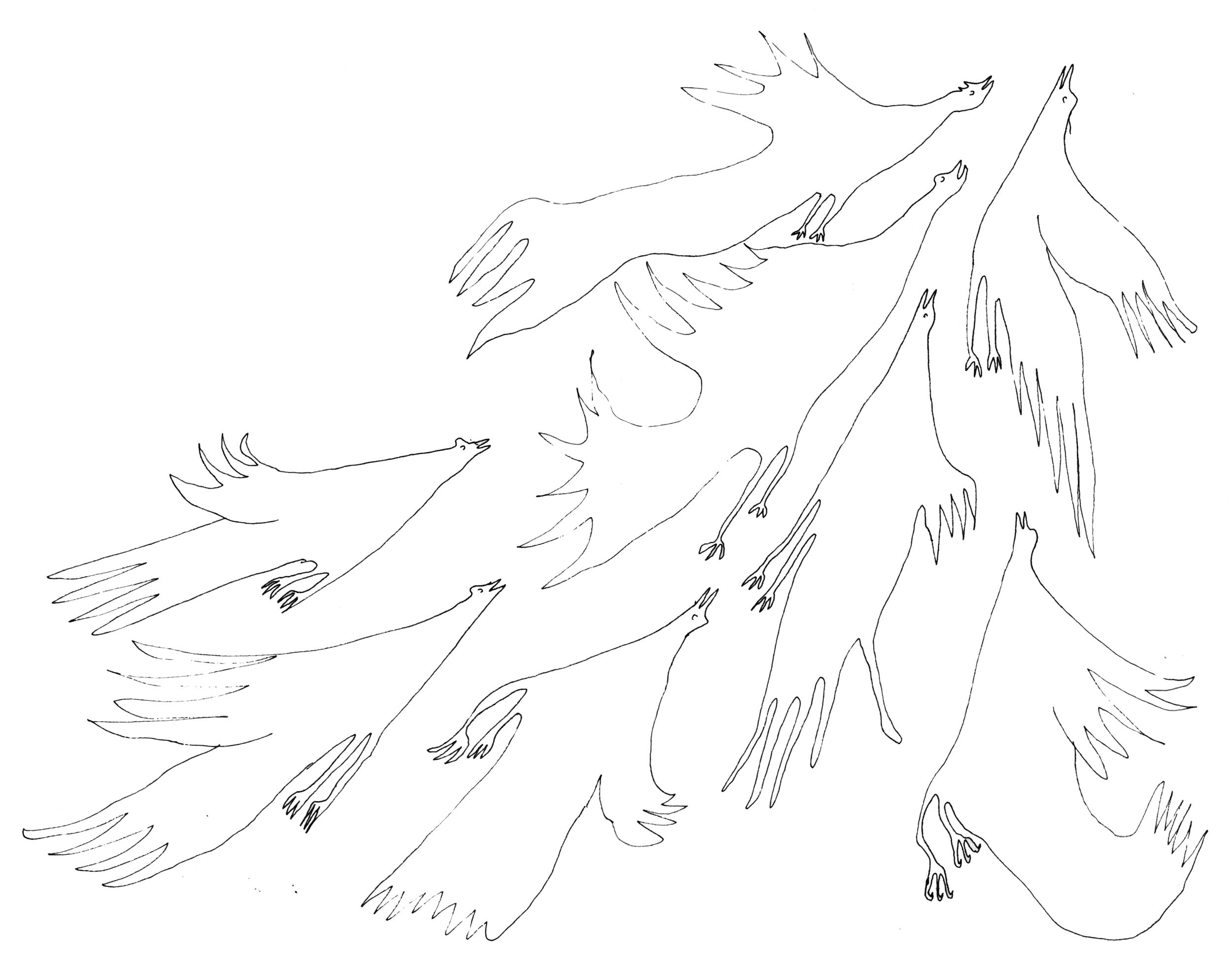 birds light.jpg