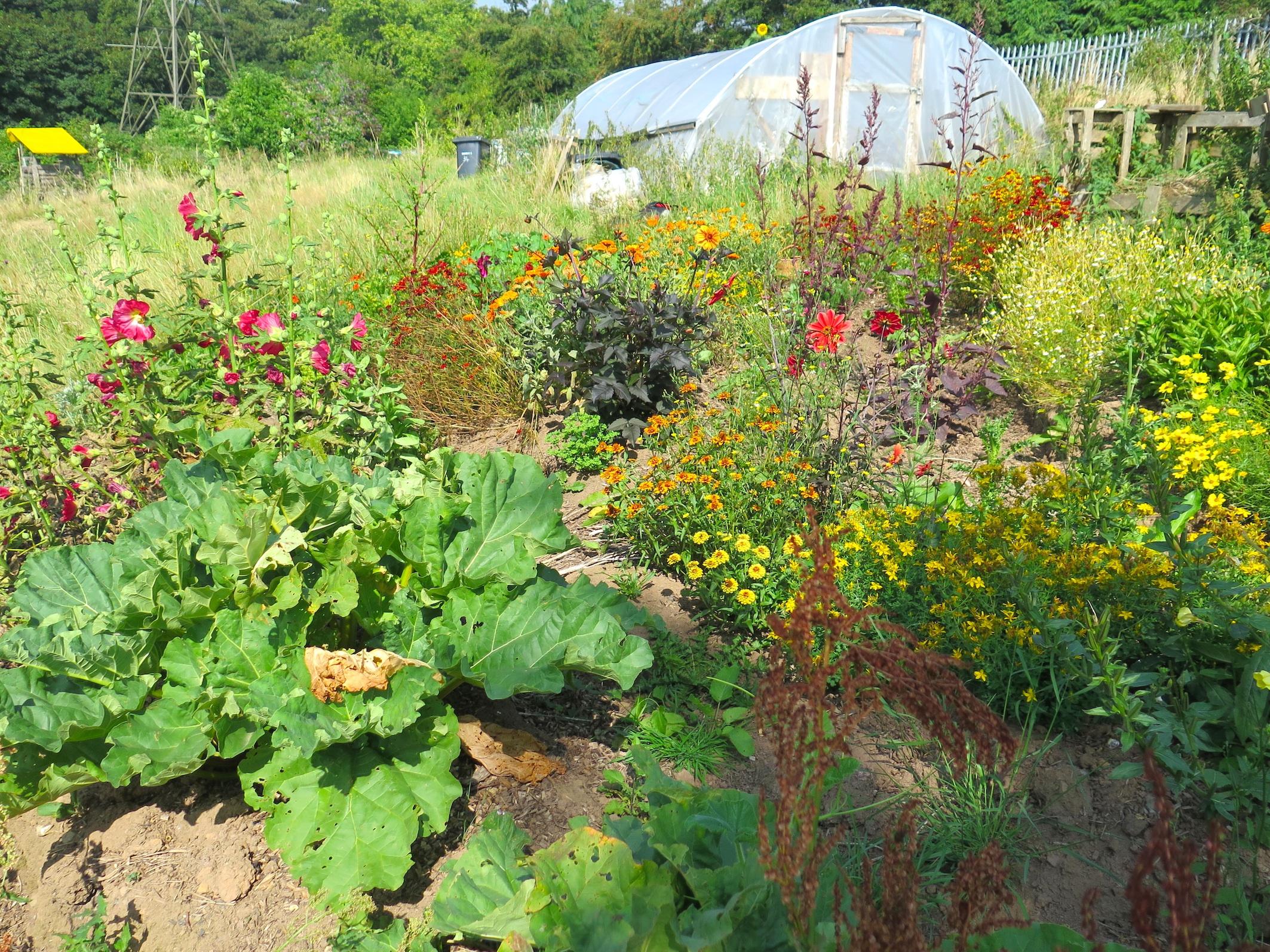the garden copy.jpg