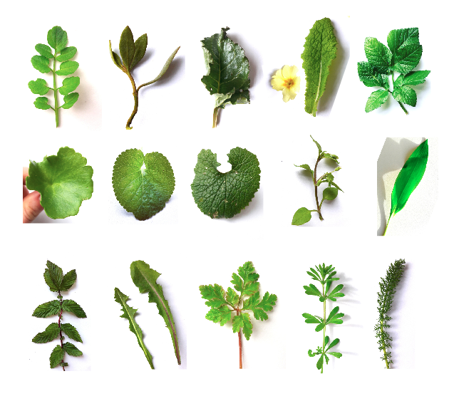 Private Wild Plant Walks - A holistic and practical approach to wild plants. Learn about all the edible wild plants that grow around us. Explore the possibilities of wild natural dye plants, and the medicinal properties of wild plants.Walks in Devon or a venue of your choice.