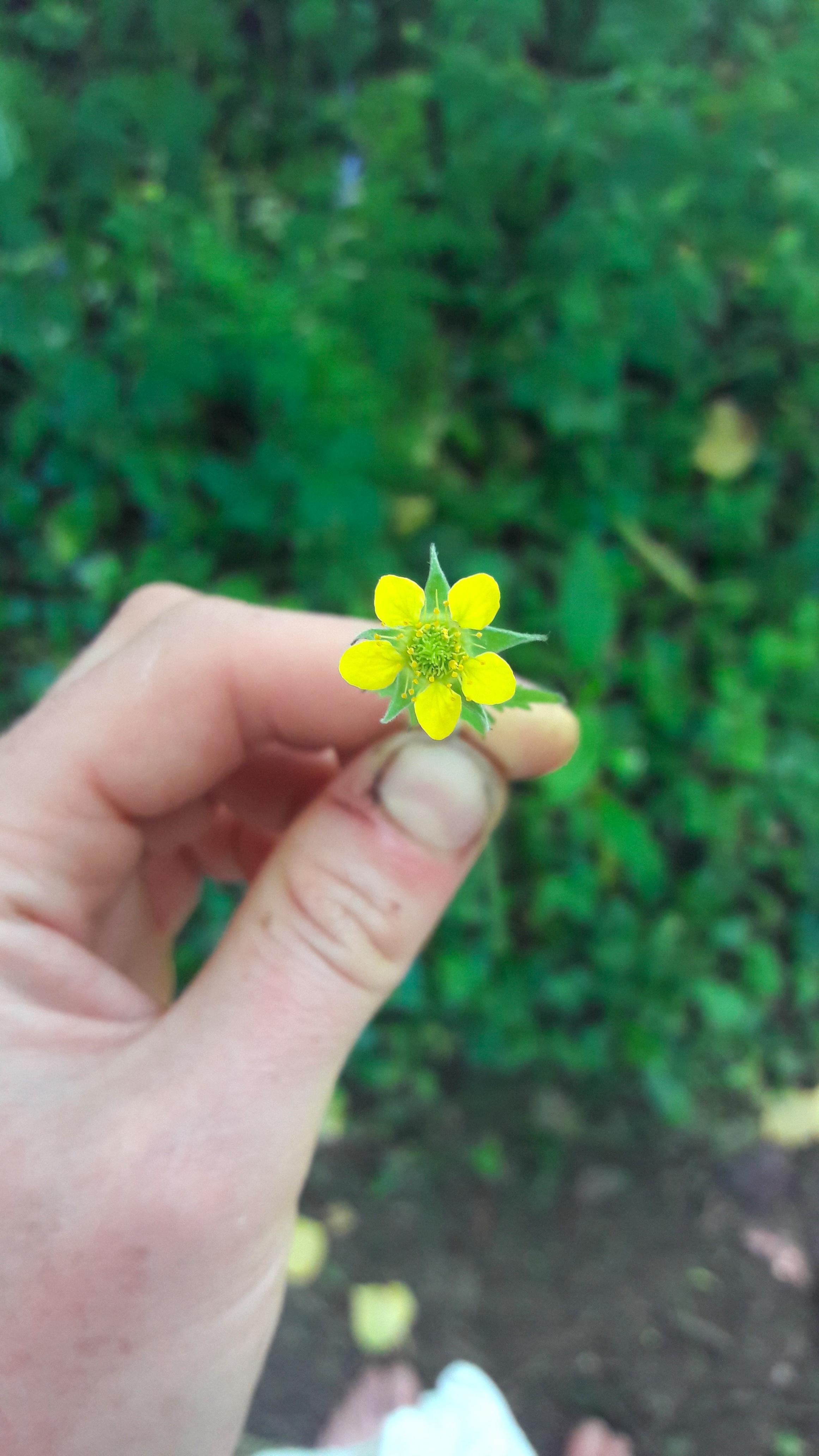 Wild Plant Walks - Explore wild natural dye plants and edible plants