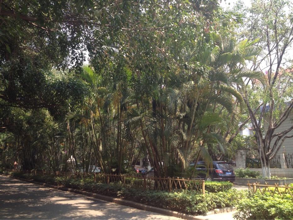 Jinghong's jungle streets