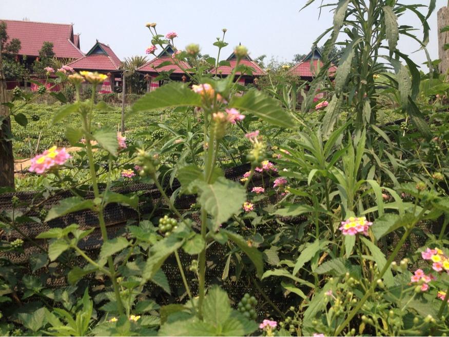 Biking through Jinghong's nearby villages