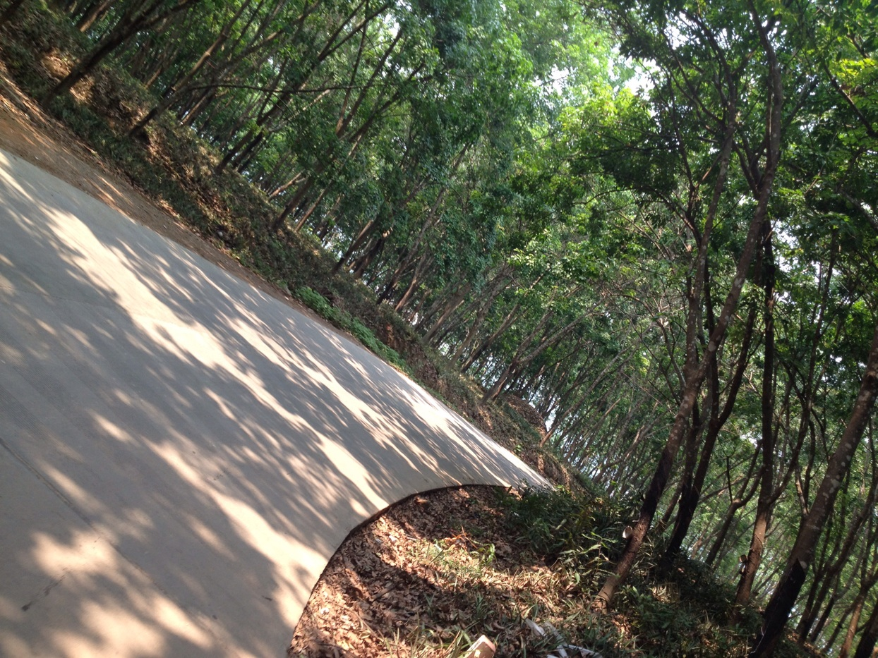 Biking in forest areas - reminds me of home