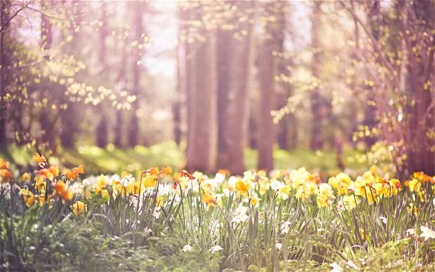 Holistisk Forårs-detox med Yin & Yang Yoga - hos Studio Ribe