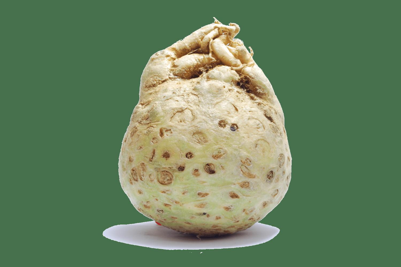 celeriac.png