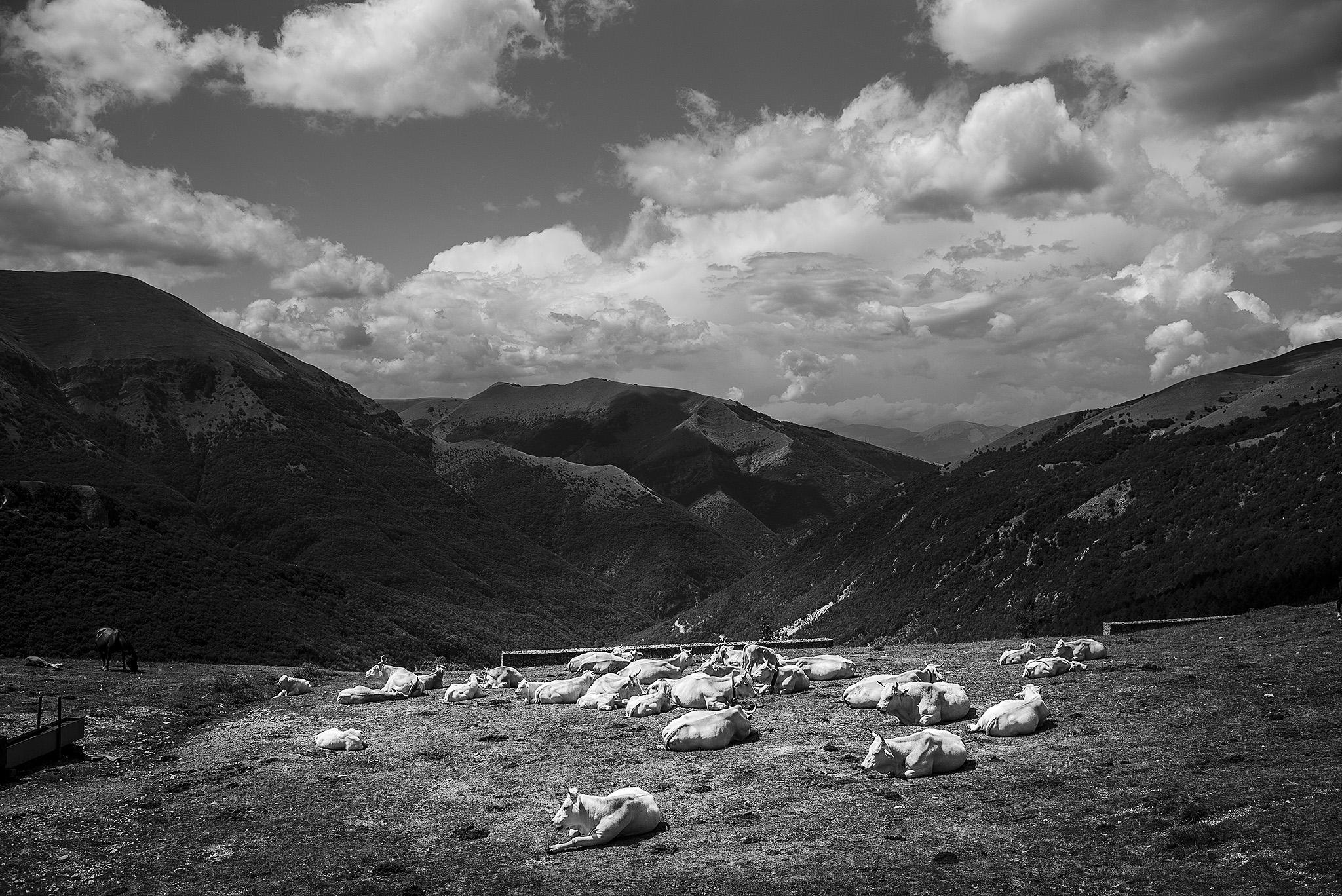 Sibelinische Berge - Leica M - 35 mm Summilux