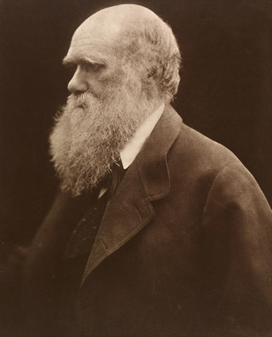 Charles Darwin, Julia Margaret Cameron, 1868, printed 1875, carbon print from copy negative. Museum no. 14-1939 © Victoria and Albert Museum, London