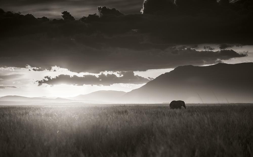 Elephant walking through tall grass in sunset, Amboseli National Park, Kenya 2017  Photo © 2017 Joachim Schmeisser. All rights reserved. www.joachimschmeisser.com