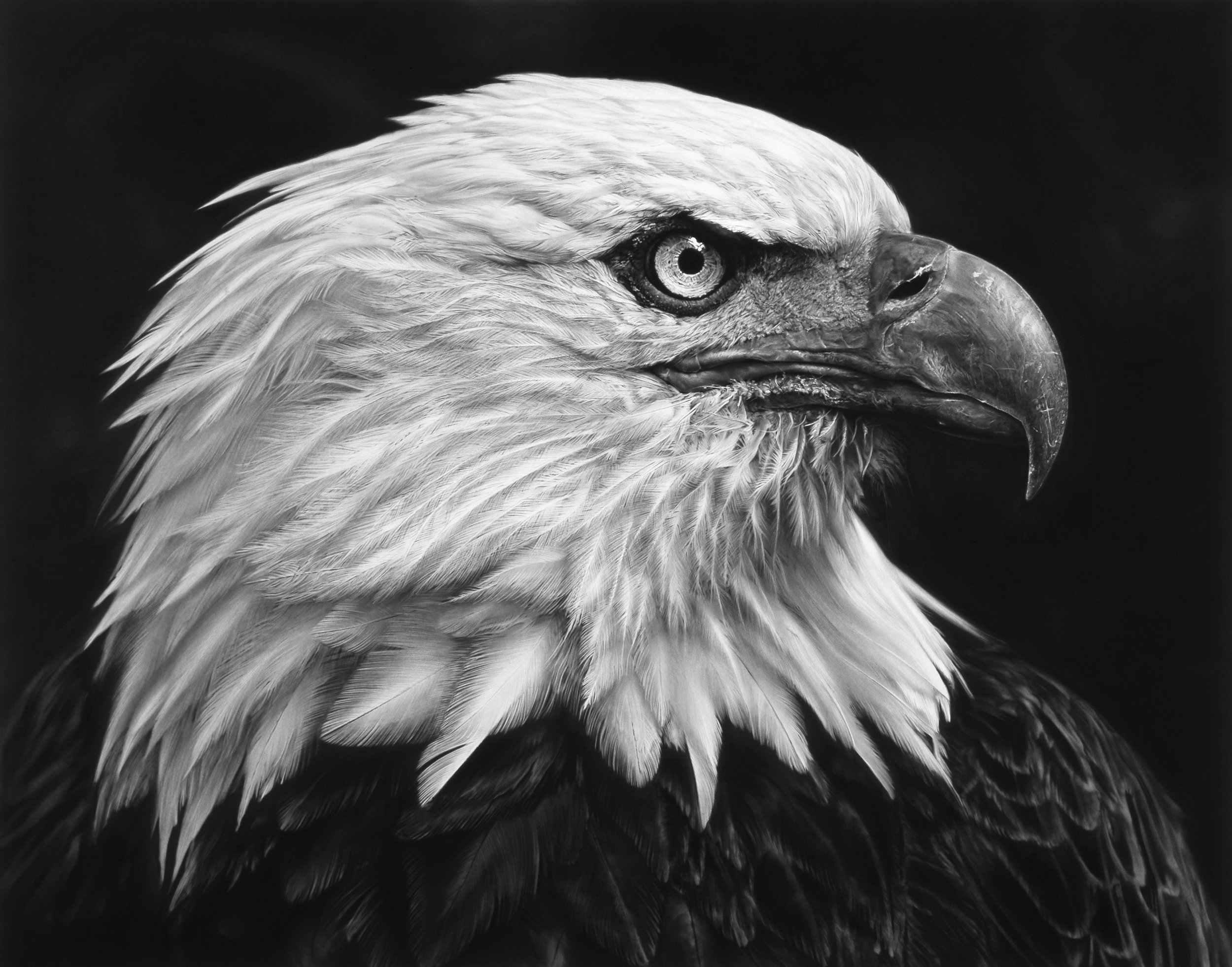 Robert Longo: Untitled (American Bald Eagle) 2017. Charcoal on mounted paper. Ståhl Collection, Norrköping, Sweden. © Robert Longo