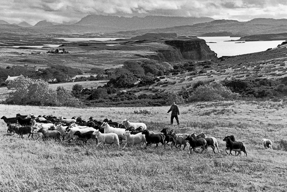 Orbost Farm, Orbost Estate, Isle of Skye,     Inner Hebrides, Scotland, 2012   Photo © 2018 Elliott Erwitt/Magnum Photos. All rights reserved.