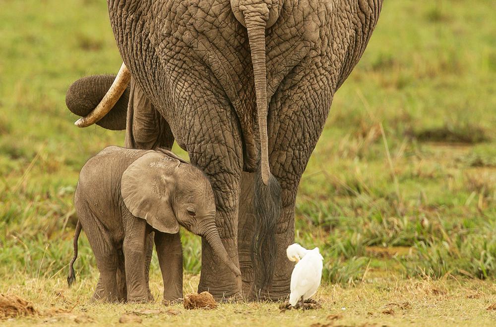 Elephant with her baby, Amboseli National Park, Kenya   Photo © 2018 Michael Poliza. All rights reserved. www.michaelpoliza.com