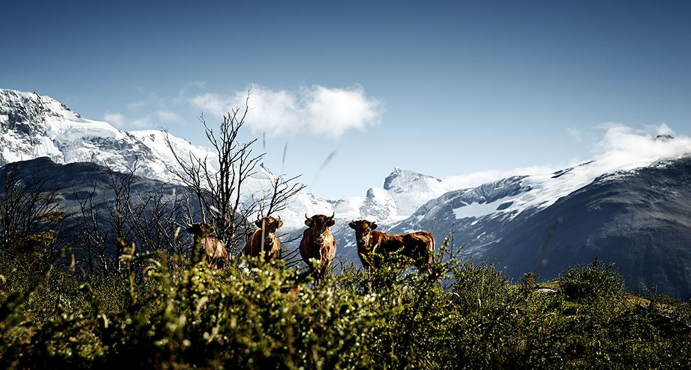 Criollo Patagónico, Provinz Santa Cruz, Argentinien  © Werner Lampert GmbH, Photo Ramona Waldner