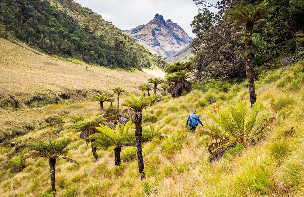 Mystisches Grasland im Hochland von Papua-Neuguinea  Photo © Adrian Rohnfelder. Alle Rechte vorbehalten.