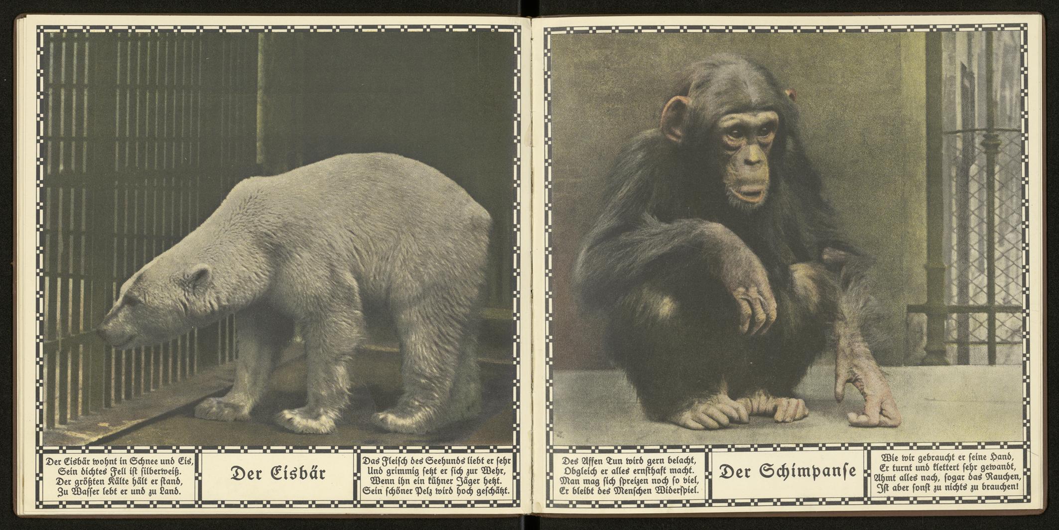 """Österreichische Staatsdruckerei """"Der Eisbär"""" und """"Der Schimpanse"""", Aus: Die neue Arche. Dreißig Tierbilder nach photographischen Naturaufnahmen, Wien: Österreichische Staatsdruckerei [1923]"""