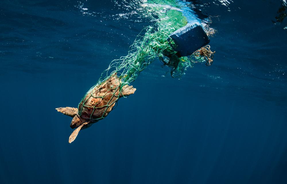 """Held: Rick Rosenthal - Kameramann - Meeresbiologe, Jährlich sterben Tausende Meeresschildkröten durch verloren gegangene und im Meer treibende Fischernetze, die sogenannten """"Geisternetze"""". Die Tiere verfangen sich darin und haben keine Möglichkeit mehr, sich zu befreien. Diese Schildkröte hatte Glück. Das Netz konnte zerschnitten und sie in die Freiheit entlassen werden  Photo © 2019 York Hovest. Alle Rechte vorbehalten."""