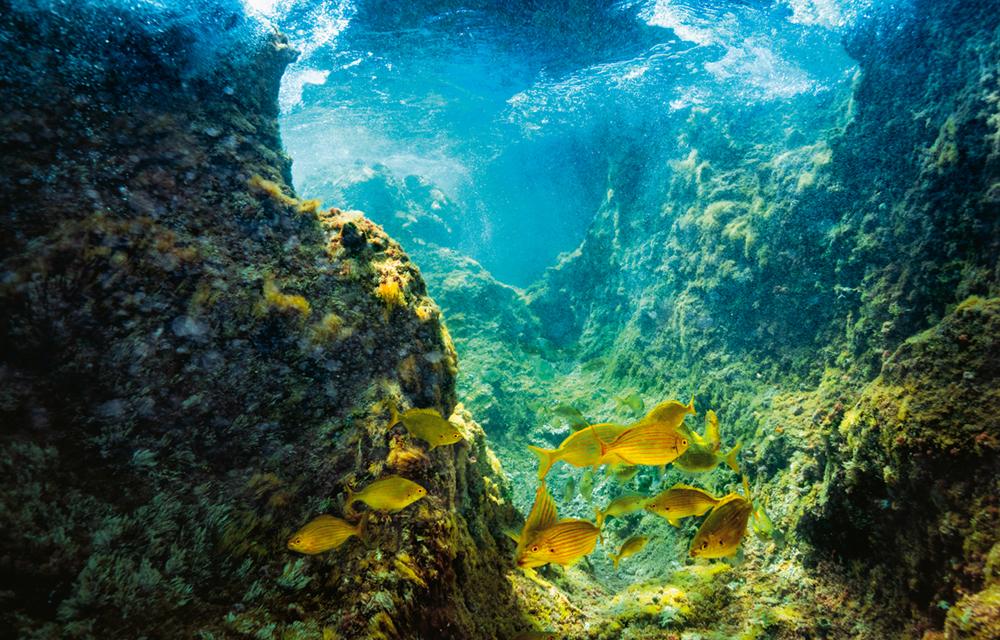 Held: Rick Rosenthal - Kameramann - Meeresbiologe, Eine Momentaufnahme der Unterwasserwelt vor dem Azoren-Archipel. Die Gewässer um die Inselgruppe zählen zu den artenreichsten der Erde, auch Pottwale machen hier auf dem Weg über den Atlantik des Öfteren Station   Photo © 2019 York Hovest. Alle Rechte vorbehalten.
