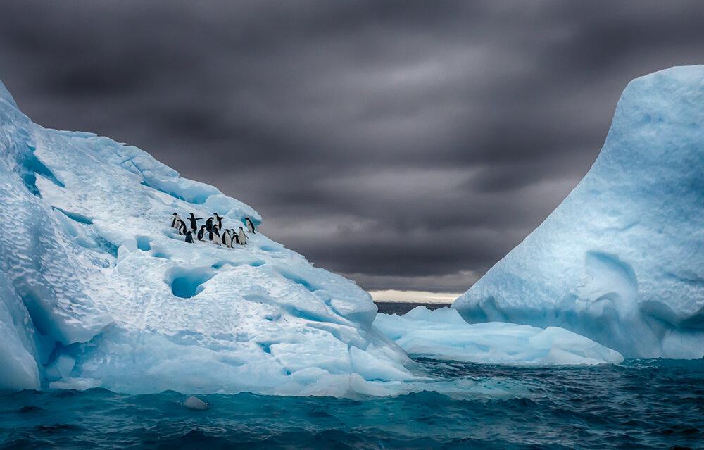 Eine Gruppe Adeliepinguine am eisigen Rand der Antarktischen Halbinsel unweit des Fortín Sargento Cabral  Photo © 2019 Michael Poliza. All rights reserved.  www.michaelpoliza.com ,  www.michaelpolizatravel.com